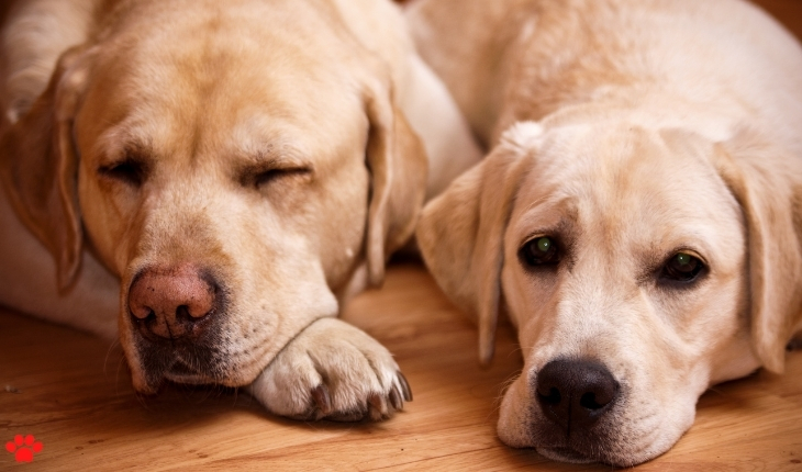 A two dogs sleeping on a floor
